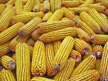 Maïs jaune image stock