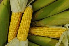 Maïs jaune Photos libres de droits