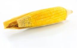 Maïs jaune Photographie stock libre de droits