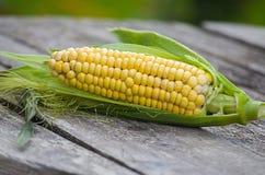 Maïs jaune de manière opérationnelle Photos libres de droits