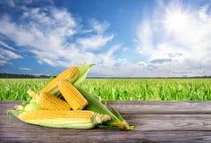 Maïs jaune mûr sur le conseil en bois sur un fond de champ de maïs images libres de droits