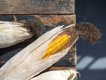 Maïs jaune mûr sur une vieille table en bois foncée Image libre de droits