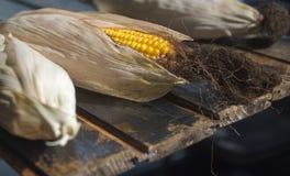 Maïs jaune mûr sur une vieille table en bois foncée Images libres de droits