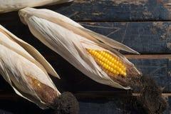 Maïs jaune mûr sur une vieille table en bois foncée Photo stock