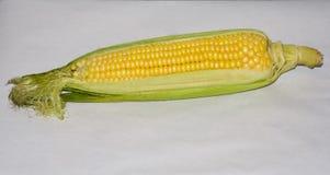 Maïs jaune sur un fond clair Chou Image libre de droits