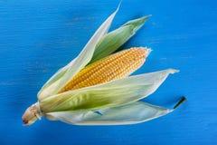 Maïs mûr jaune sur le fond bleu Image stock