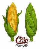 Maïs mûr illustration stock