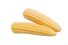 Maïs mariné Images stock