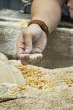 Maïs moulu Image stock