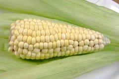 Maïs organique frais Photos libres de droits
