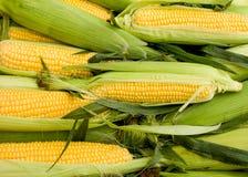 Maïs organique frais sur l'épi Image libre de droits