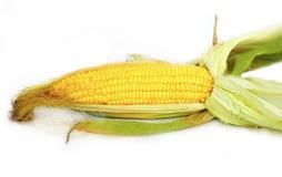 Maïs organique local frais Photo libre de droits