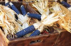 Maïs pourpré dans la caisse Photos libres de droits