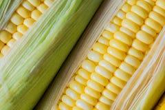 Maïs prêt pour examiner dans le laboratoire photos stock