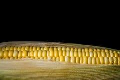 Maïs prêt pour examiner dans le laboratoire photographie stock