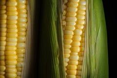 Maïs prêt pour examiner dans le laboratoire images stock