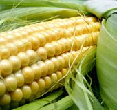 maïs proche vers le haut Photographie stock