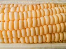 Maïs récemment récolté Photos libres de droits