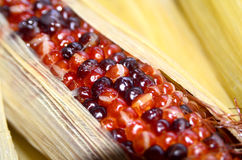Maïs rouge Photos libres de droits