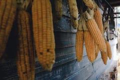 Maïs sec images libres de droits