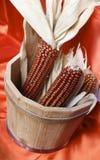 Maïs sec Photo stock