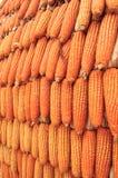 Maïs sec Photo libre de droits