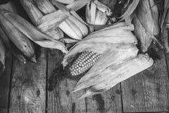 Maïs sec Images stock