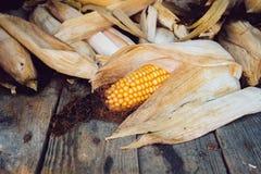 Maïs sec Image stock