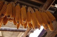 Maïs sec accrochant sur le toit photographie stock