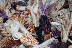 Maïs sec décorativement avec des couleurs terreuses Images libres de droits
