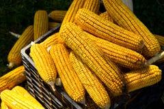Maïs sec dans une caisse Images stock