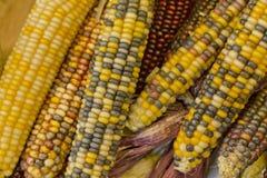 Maïs sec par Indien Photographie stock libre de droits