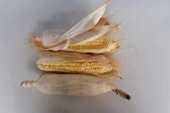 Maïs sec par multiple Image libre de droits