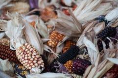 Maïs sec pour la décoration Photos libres de droits
