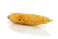 Maïs sur l'épi Image libre de droits