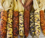 Maïs sur l'affichage pour juger à la foire régionale photographie stock