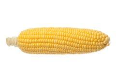 Maïs sur la cannette de fil d'isolement sur le fond blanc Image stock