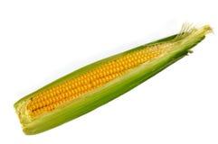 Maïs sur le fond blanc Photographie stock libre de droits