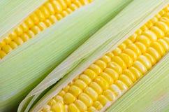 Maïs sur le fond blanc Image stock