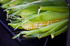 Maïs sur le gril Photographie stock