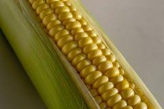 Maïs sur un fond blanc Image stock