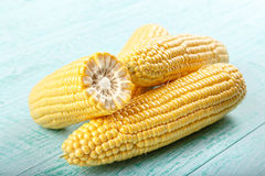 Maïs sur un fond bleu Images libres de droits