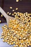 Maïs - Zea mays Stock Foto
