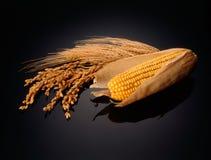 Maïskolf met rijst en oren van tarwe royalty-vrije stock afbeeldingen