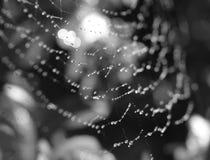 Maïskolfweb stock foto