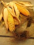 Maïskolven stock afbeelding