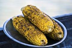 Maïskolven. stock afbeeldingen