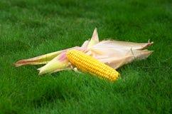 Maïskolven en schil op het gras stock fotografie