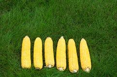 Maïskolven en schil op het gras royalty-vrije stock foto's
