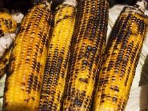Maïskolven van graan Royalty-vrije Stock Foto